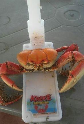 Fortalezense cria ferramenta para facilitar a degustação do caranguejo